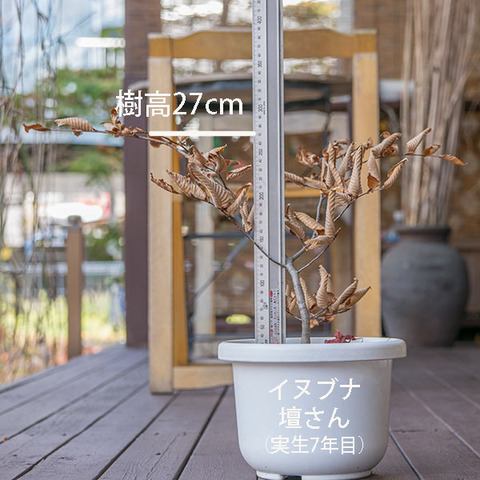 20181111inubuna_7y_dan_01.jpg