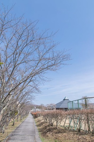 20190418yagasaki-sakura01.jpg