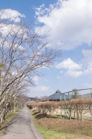20190422yagasaki-sakura01.jpg