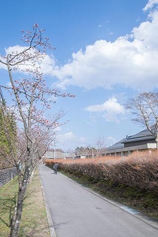 20190422yagasaki-sakura02.jpg