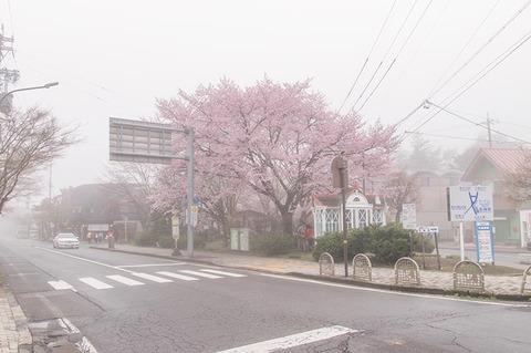 20190426lotary-sakura02.jpg