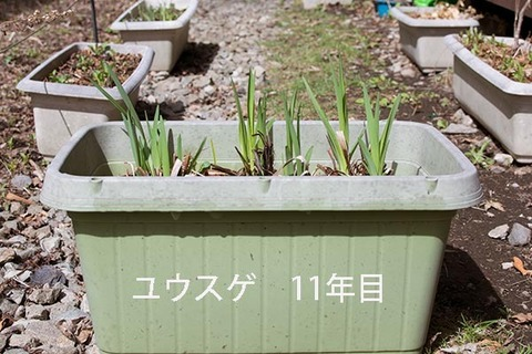 20190428yusuge_planter_11y.jpg