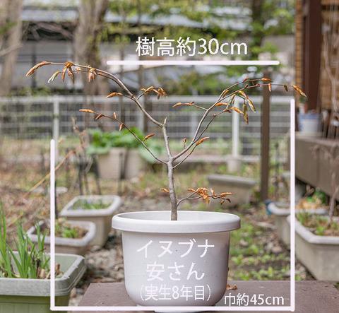 20190501inubuna8y_dan_01.jpg