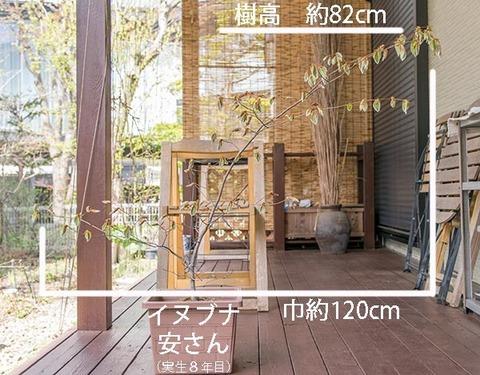 20190505inubuna8y_an_01.jpg
