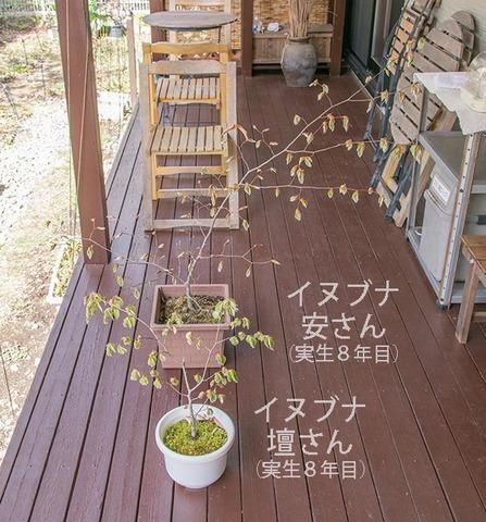 20190505inubuna8y_an_dan_01.jpg