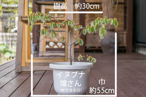 20190505inubuna8y_dan_01.jpg
