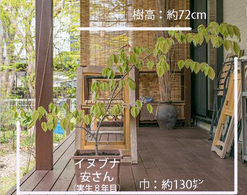 20190511inubuna8y_an_01.jpg