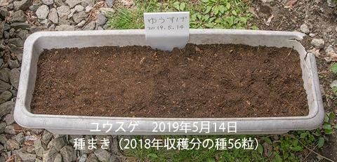 20190514yusuge_planter_1y_2018seed_01.jpg