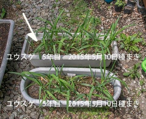 20190514yusuge_planter_5y-uekae01.jpg