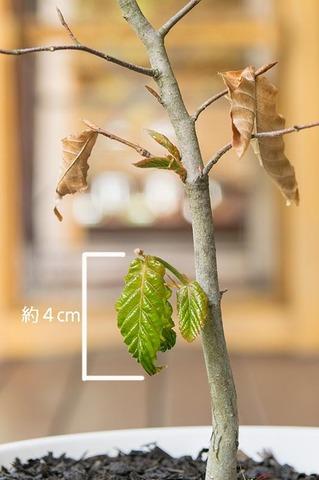 20190515buna_su_6y_02.jpg