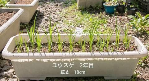 20190517yusuge_planter_2y-01-20180415.jpg