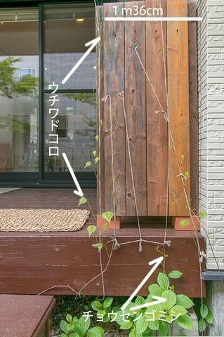 20190518midori02_chosengomishi_uchiwadokoro01.jpg