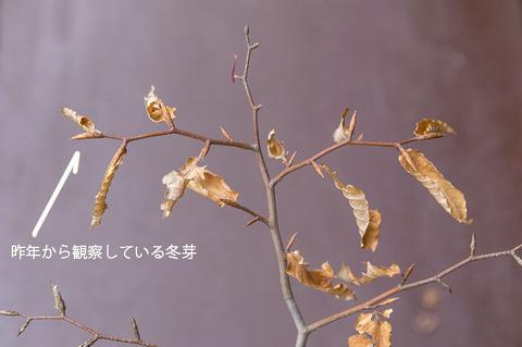 20190519buna_su_6y_04.jpg