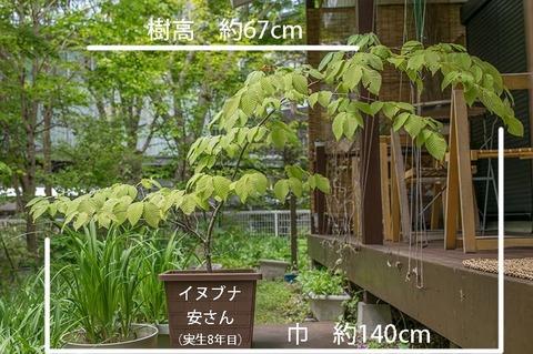 20190522inubuna8y_an_01re.jpg