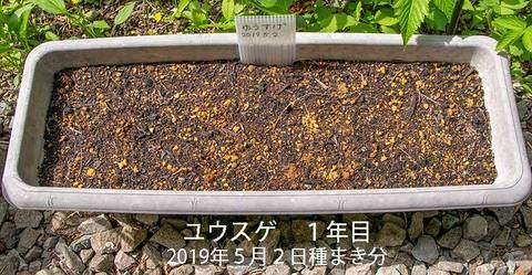 20190526yusuge_planter_1y_2018seed_20190502start.jpg