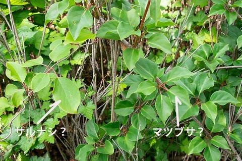 20190601jisei-matsubusaC04_sarunashi.jpg