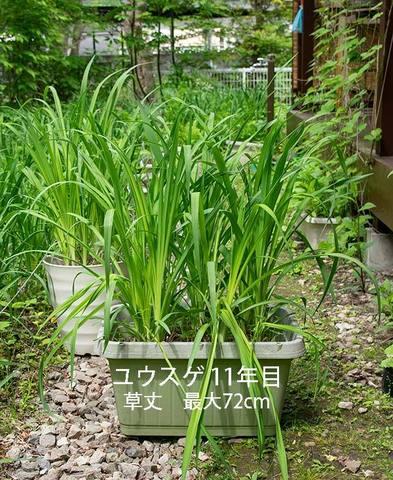 20190605yusuge_planter_11y.jpg