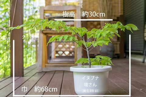 20190606inubuna8y_dan_01.jpg