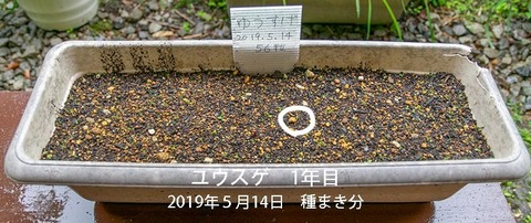 20190607yusuge_planter_1y_2018seed_20190514start_01.jpg