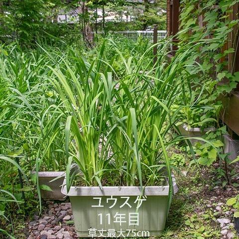 20190616yusuge_planter_11y.jpg
