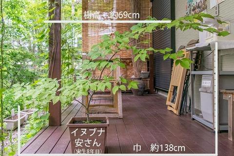 20190617inubuna8y_an_01.jpg