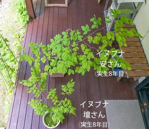 20190617inubuna8y_an_dan_01.jpg