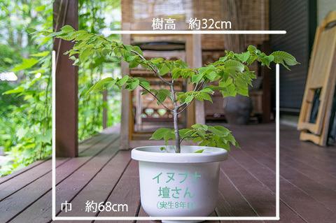 20190617inubuna8y_dan_01.jpg