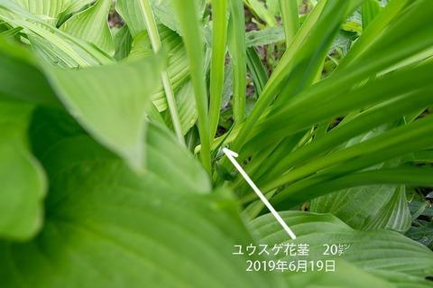 20190619yusuge_kakei_bycA01.jpg
