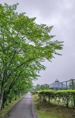 20190621yagasaki-sakura01.jpg