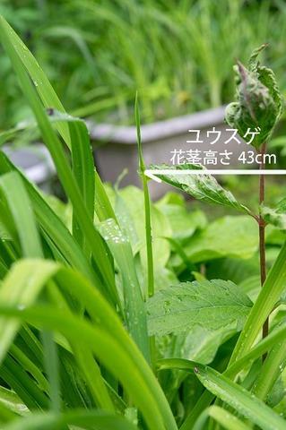 20190622yusuge_kakei_bycA01.jpg