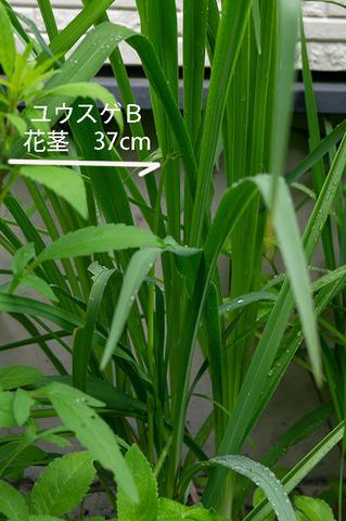 20190628yusuge_kakei_bycB01.jpg
