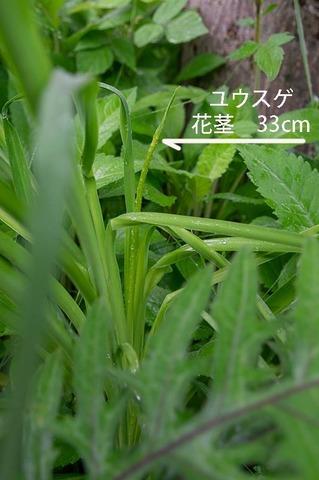 20190629yusuge_kakei_treeA02.jpg