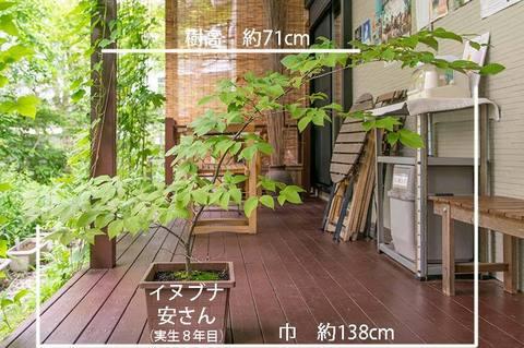 20190701inubuna8y_an_01.jpg