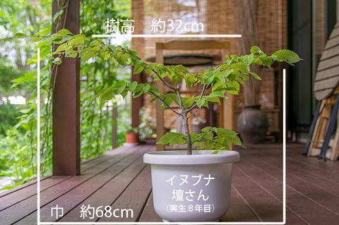 20190701inubuna8y_dan_01.jpg