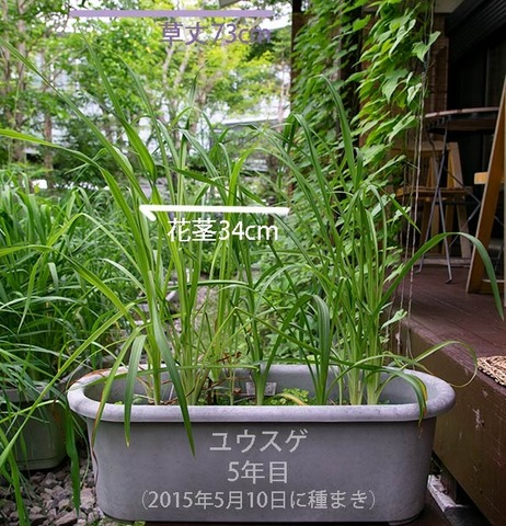 20190703yusuge_planter_5y_01.jpg
