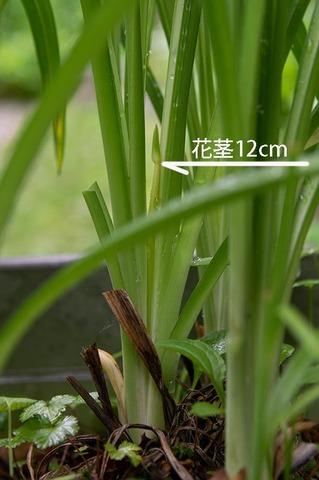 20190704yusuge_planter_11y-02.jpg