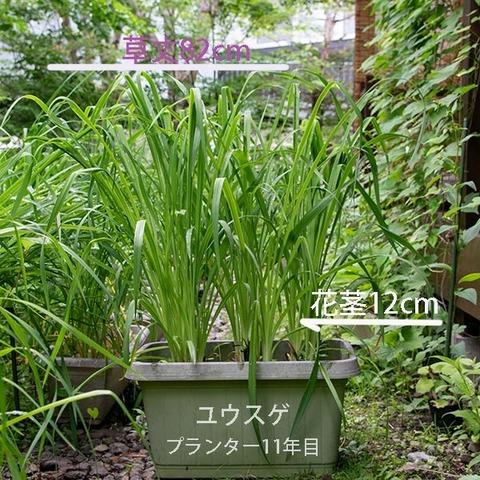 20190704yusuge_planter_11y.jpg