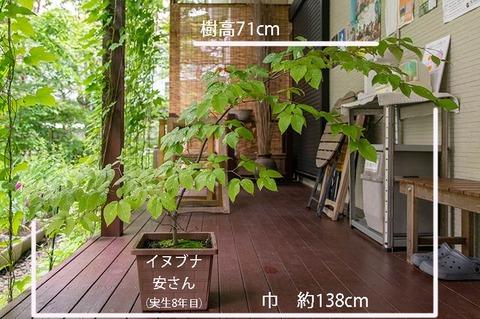 20190715inubuna8y_an_01.jpg
