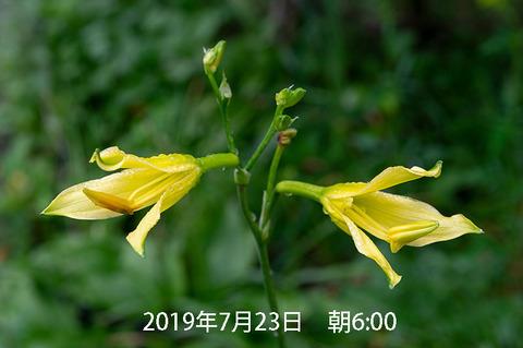 20190723yusuge_jiueA01-0653.jpg