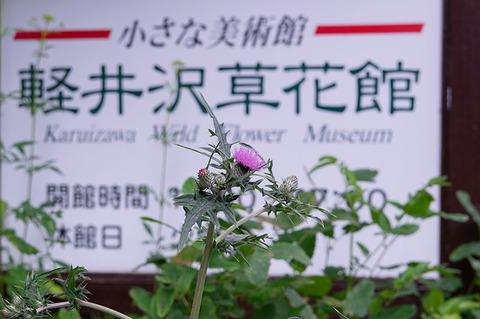 20190727noharaazami.jpg