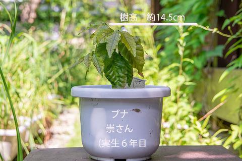 20190730buna_su_6y_01.jpg