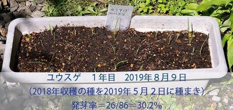 20190809yusuge-20190502tanemaki.jpg