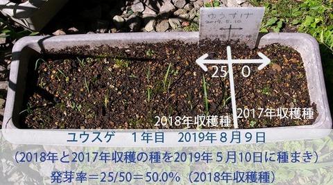 20190809yusuge-20190510tanemaki.jpg