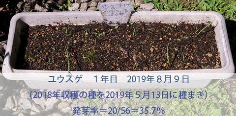 20190809yusuge-20190513tanemaki.jpg