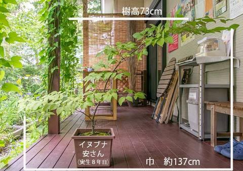 20190811inubuna8y_an_01.jpg