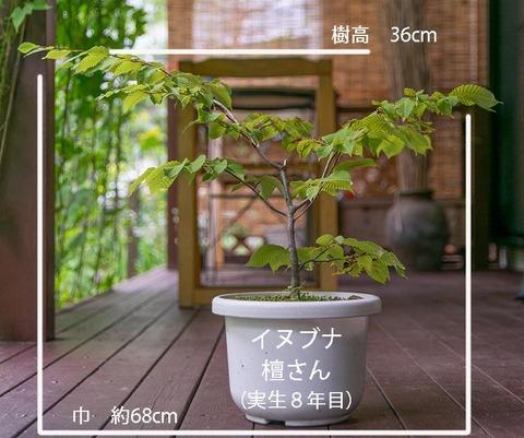 20190811inubuna8y_dan_01.jpg