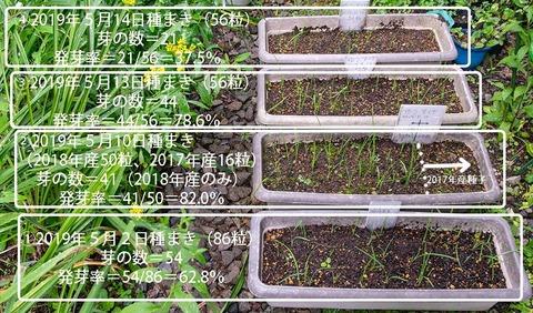 20190819yusuge_planter_1y_2018seed_20190502-14start.jpg