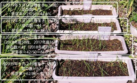 20190824yusuge_planter_1y_2018seed_20190502-14start.jpg