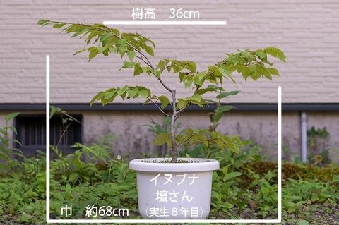 20190825inubuna8y_dan_01.jpg