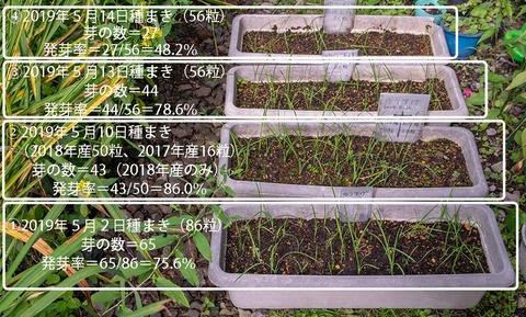 20190829yusuge_planter_1y_2018seed_20190502-14start.jpg
